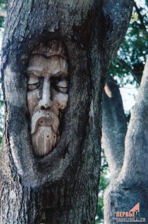 Лица деревьев.