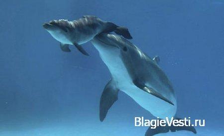 Подводные роды и дельфины-акушеры.