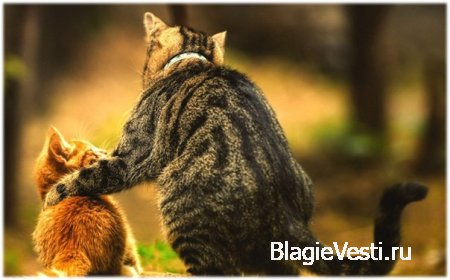 Мы должны постоянно выделять порции любви и тепла к ближним и окружающему миру.