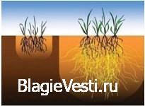Экологически чистые натуральные семена
