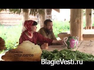 Коротко, сочно и интересно о Русском Иван-чае