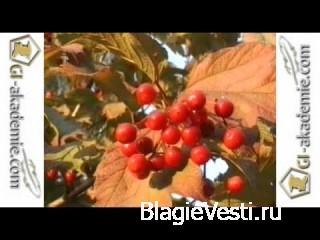 Фильмы о целебных травах   от Валерия Бабаурина