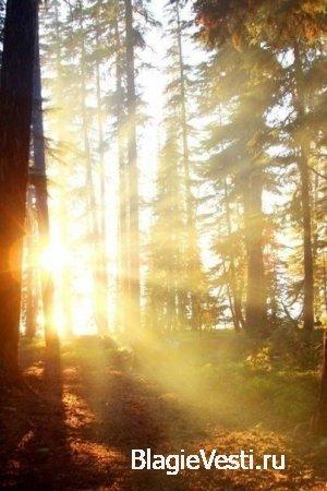 СОБСТВЕННЫЙ ЛЕС: И СЕБЕ, И ЛЮДЯМ, ПОЭТОМУ И ДЛЯ ОТЧИЗНЫ
